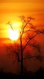 The Sun. A tree on sunrise background Stock Photo