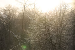 Sun Tree Royalty Free Stock Photography