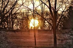 Sun through the trees Royalty Free Stock Photography
