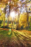 The Sun & Trees. A view of park during autumn, with the sun shining through leaves royalty free stock photo