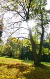 The Sun & Trees. A view of park with trees and the sun shining through leaves Stock Photo