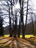 The Sun & Trees Stock Photo