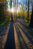 Sun through trees Royalty Free Stock Images