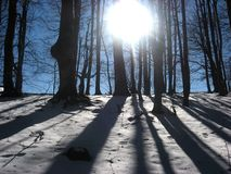 Sun in the trees. Winter Royalty Free Stock Image