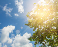 The sun in the trees against the blue sky. Beautiful natural bac Stock Photo