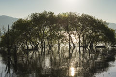 The sun, the trees grow in water Stock Images