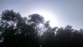 Sun in the trees. The sun hiding in the trees. Very bright Royalty Free Stock Photography