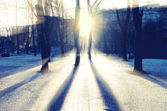 Sun through the trees in the park with shadows on the ice Stock Photography