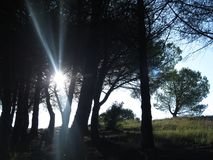 Sun between the trees Stock Photos