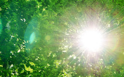 Sun among trees Royalty Free Stock Photo