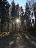 Sun and trees royalty free stock photos