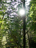 Sun through the trees Stock Photo