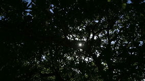 The sun through trees. stock video footage