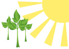 Sun and trees - vector illustration. Vector sun and trees -  illustration Stock Photography