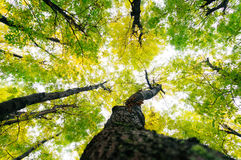 Sun through treetops Royalty Free Stock Images
