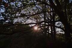 Sun through tress, dark foreground with bright sunshine, photo taken in the UK royalty free stock images