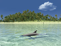 Sun ,tropical coast and dolphin Stock Photos