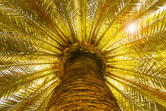 Sun and tropical palm tree Royalty Free Stock Photos