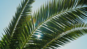 The sun is in the tropics. The leaves of a palm tree can be heard in a light wind, the rays of the sun shine stock video