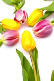 Sun of tulips. Circle of bright yellow and pink tulips on white Stock Image