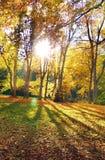 The Sun u. Bäume Lizenzfreies Stockfoto