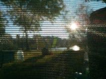 Sun u. Baum durch Gitter Lizenzfreies Stockfoto