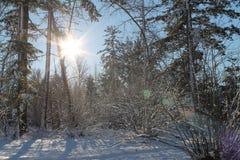Sun u. Schnee lizenzfreies stockfoto