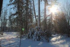 Sun u. Schnee lizenzfreie stockfotos