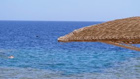 Sun umbrella on a coral beach in Egypt on the red sea. Wicker exotic parasol on the beach of a luxury resort. The sunny coastline on reef coast of Sharm el stock video footage