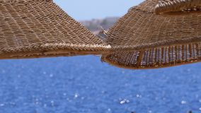 Sun umbrella on a coral beach in Egypt on the red sea. Wicker Exotic Parasol on the Beach of a Luxury Resort. The sunny coastline on Reef Coast of Sharm el stock video