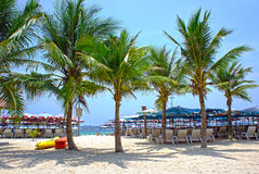 Sun umbrellas and beach chairs on tropical coastline, Thailand.  Royalty Free Stock Photo