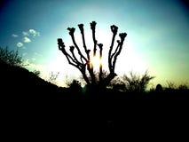 Sun in un albero Fotografia Stock
