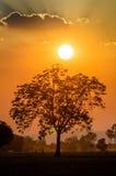 Sun und Baum Lizenzfreie Stockfotografie
