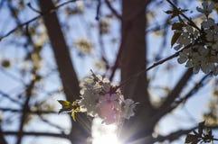 Sun und Blumen Lizenzfreie Stockbilder