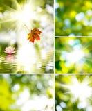 Sun und die schöne Blume Lizenzfreies Stockfoto