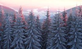 Sun und Frost in den Karpaten Lizenzfreie Stockfotografie