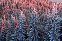 Sun und Frost in den Karpaten Stockfoto