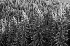 Sun und Frost in den Karpaten Stockfotos