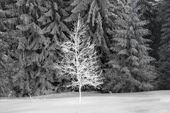 Sun und Frost in den Karpaten Lizenzfreie Stockfotos