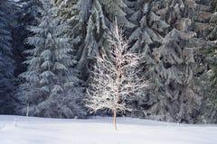 Sun und Frost in den Karpaten Stockbild