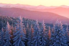 Sun und Frost in den Karpaten Stockfotografie