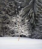 Sun und Frost in den Karpaten Lizenzfreie Stockbilder