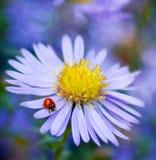 Sun und Gänseblümchen auf einem blauen Hintergrund stockfotografie