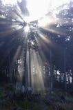 Sun und Nebel lizenzfreie stockbilder