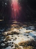 Sun und Schnee Lizenzfreie Stockfotografie