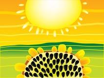 Sun und Sonnenblume-Hintergrund stockbilder