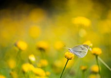 Sun under the butterfly and chrysanthemum Stock Image