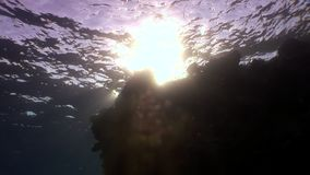 Sun underwater reflection in Red sea. Relax video about marine life stock video