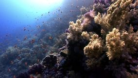 Sun underwater reflection in Red sea. Relax video about marine life stock video footage