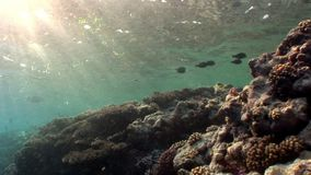 Sun underwater reflection in Red sea. Relax video about marine life stock footage